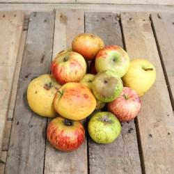Pommes déclassées pour animaux. Les 5kg
