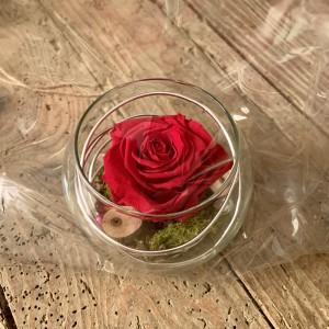 Composition verine rose éternelle rouge