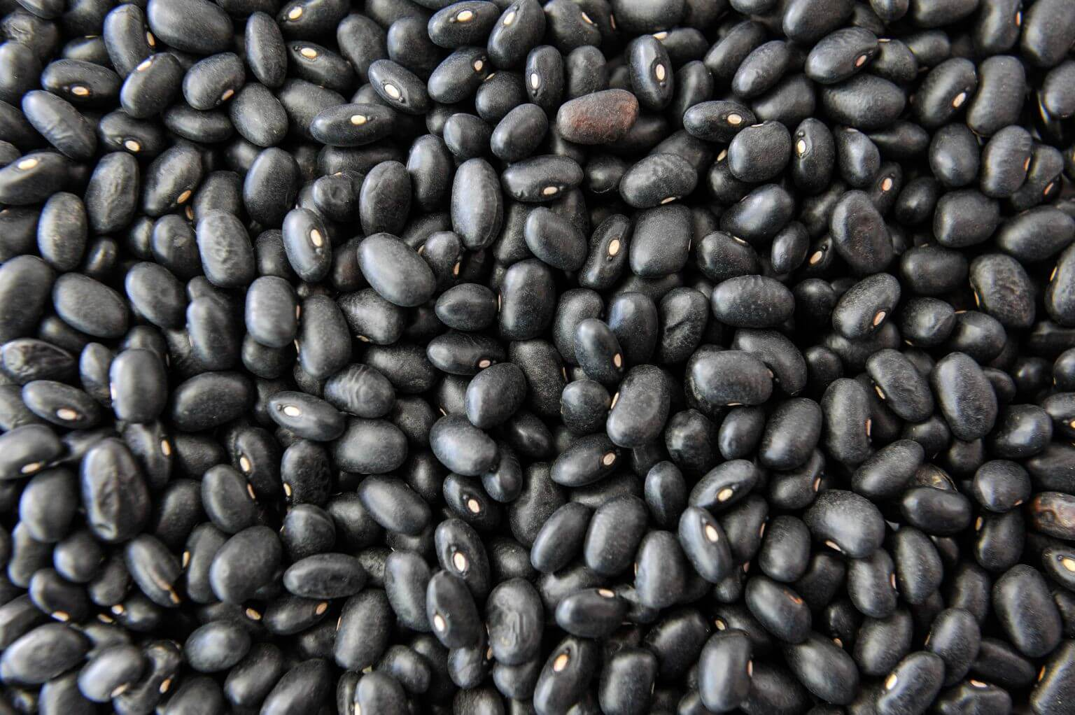 Haricots Noirs Bio