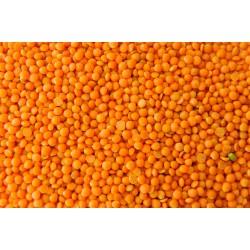 Lentilles Corail Bio