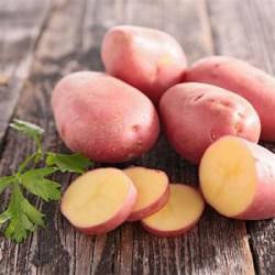 Pomme de terre Rosabelle