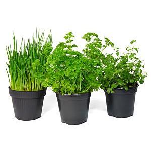 Plants en Pot